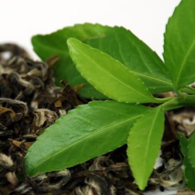 Najbardziej cenne są pąki liściowe i młodziutkie liście - tzw. kwiat herbaciany. Uzyskuje się z nich najwykwintniejsze w smaku herbaty o słomkowej lub pomarańczowej barwie.